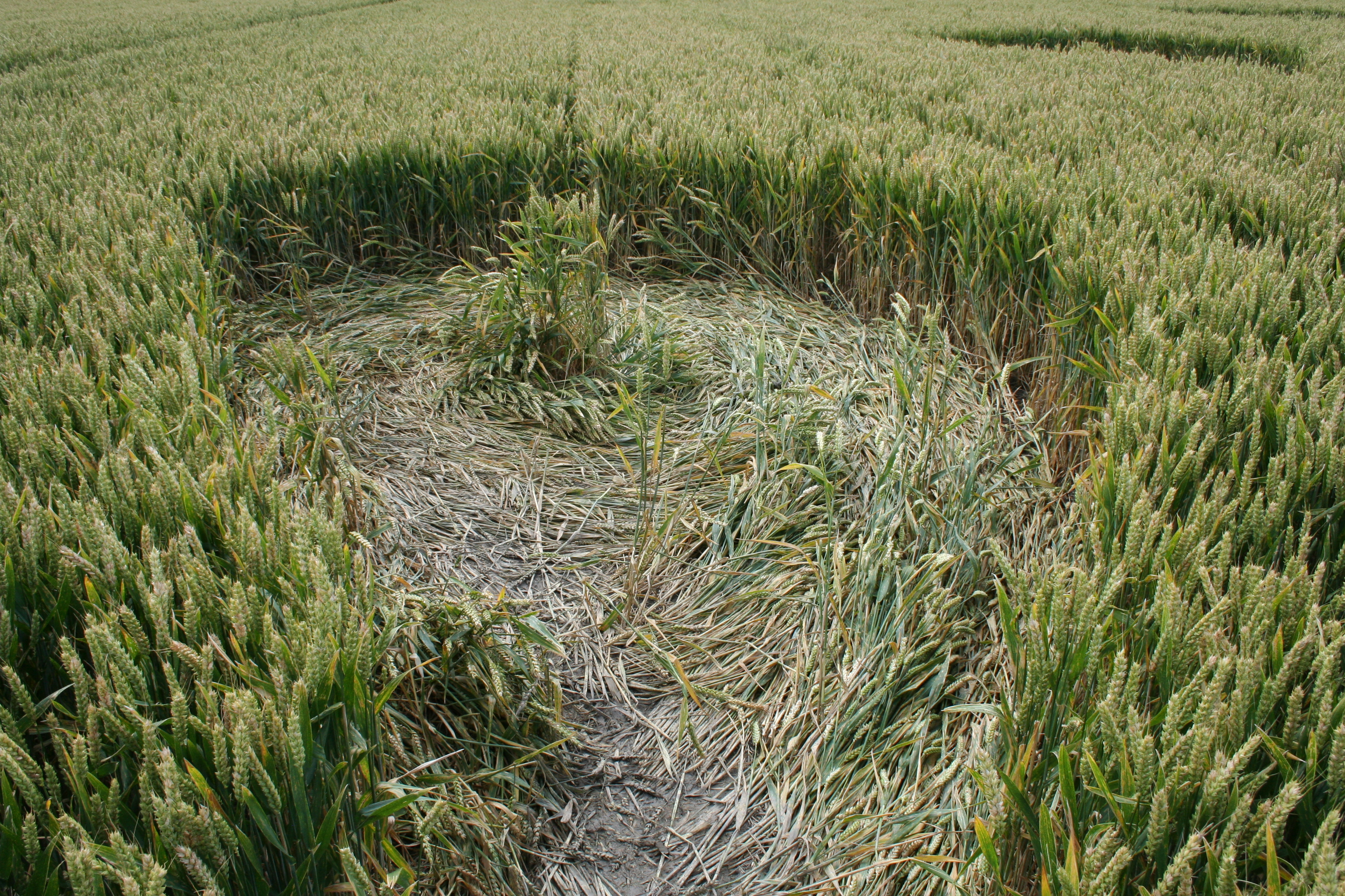 crop_circle_flight-118